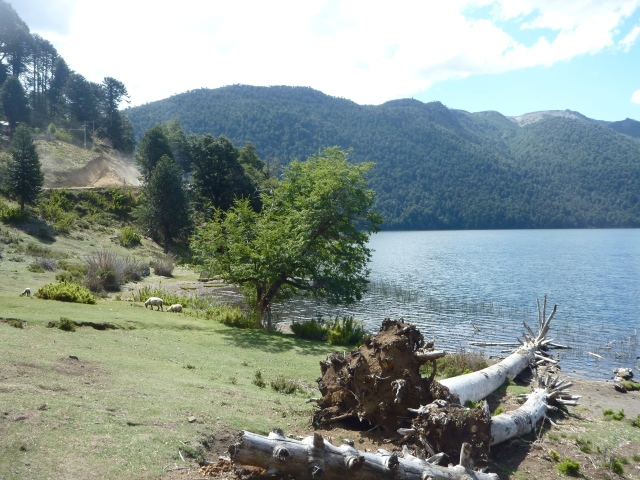 My private beach, Lago Icalma